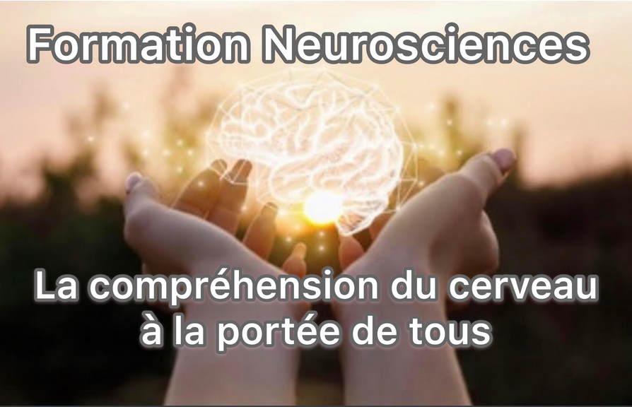 Le fonctionnement du cerveau à la portée de tous